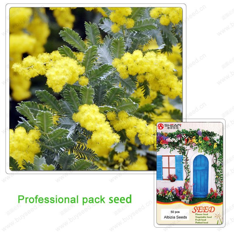 1 حزمة المهنية الذهبي بذور ميموزا شجرة السنط baileyana السياج الأصفر الجميل زهرة bonsai-50 pcs(China (Mainland))
