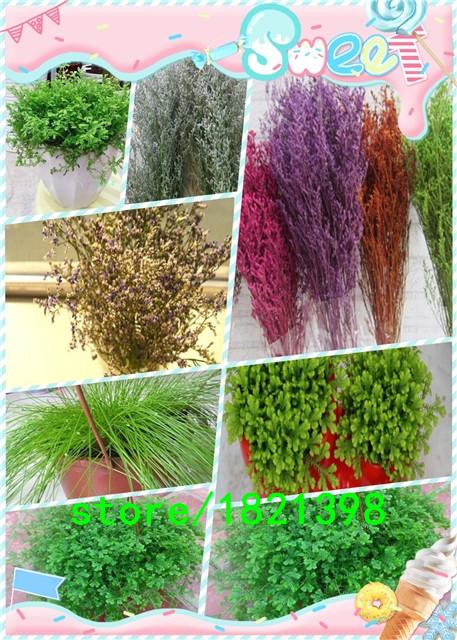 Hot Sale 100pc/pack Fresh Qingren Cao seeds Qingren Cao grass seeds10 Colors Genuine Charming Bonsai Seeds Free Shipping(China (Mainland))