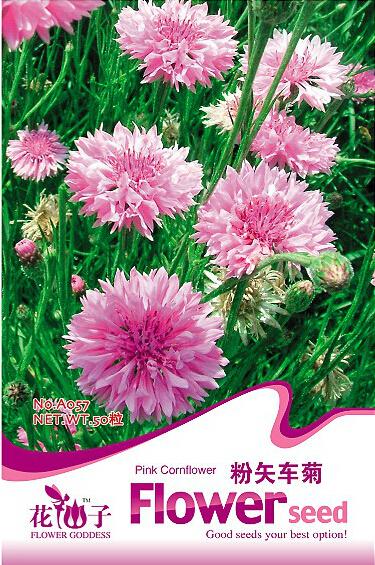 1 Original Pack, 50 seeds / pack, TALL Pink BACHELORS BUTTON CORNFLOWER Seeds #A057(China (Mainland))