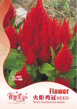 Approx 40 seeds / pack, Potted Perennial Herbs Torch Cockscomb Seeds, Red Celosia Cristata Flower Land Miracle LMA027(China (Mainland))