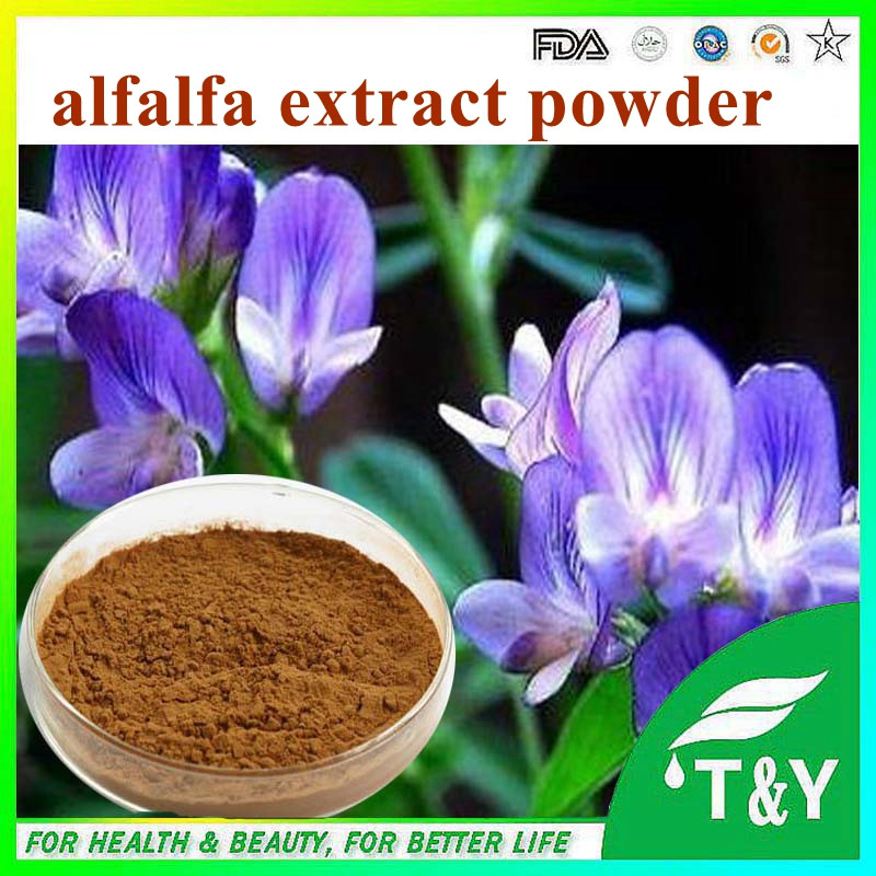 China GMP manufacturer supply 100% natural Alfalfa P.E./alfalfa extract