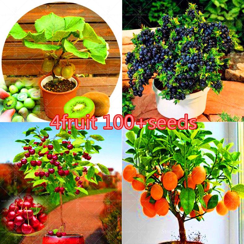 Totally free shipping promotion achetez des totally free for Tipi di bonsai