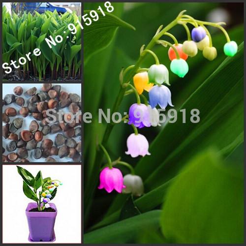 Flower Bonsai seeds 120pcs import bell orchid seeds,Windbell orchids, rare precious flowers! Home gardening DIY(China (Mainland))