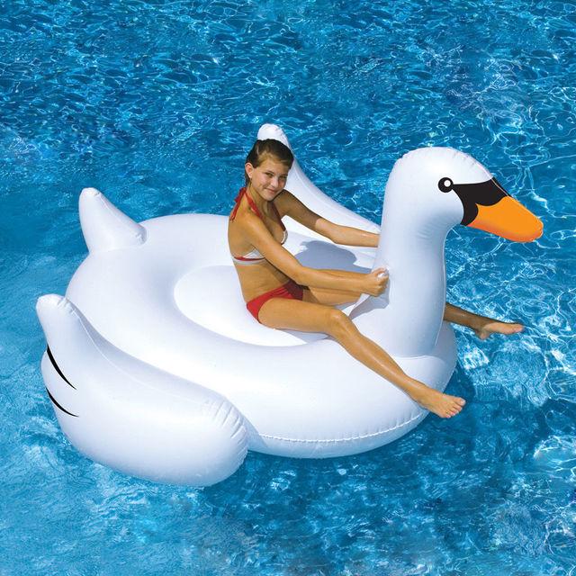 White Swan Swimming Lounge