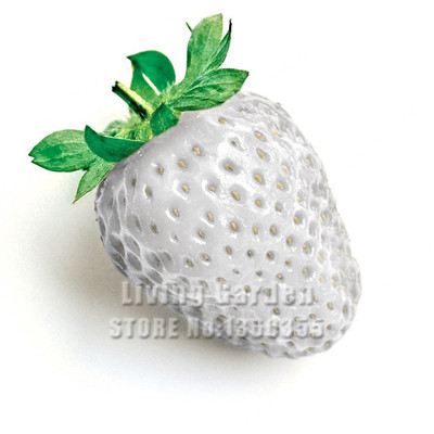 New Arrival! 50 PCS White Fresh Strawberry Seeds Planting a Garden Courtyard and Green Fruits and Begetables Strawberry Seeds(China (Mainland))