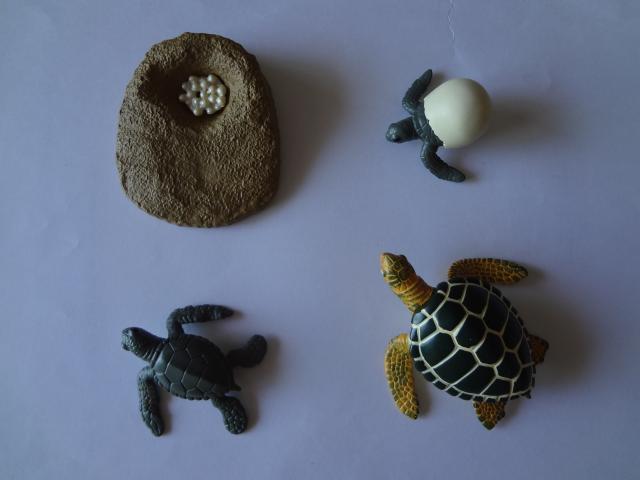 pvc figure Genuine simulation model toy turtle green turtle cycle set(China (Mainland))