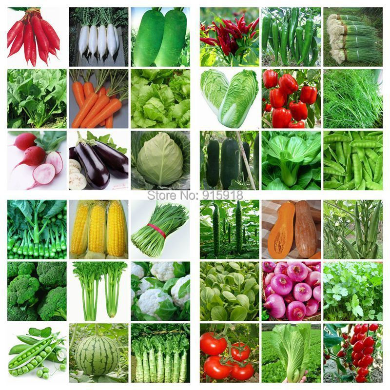 36 Packs Varieties 8000 Pcs seeds emergency survival heirloom vegetable garden seeds NON GMO organic 2014 Hot ! Home & Garden(China (Mainland))