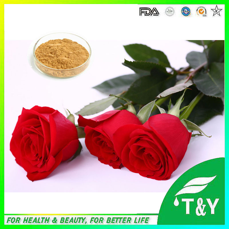 Hot sale! Manufacturer supply chinese rose extract 900g/lot free shipping<br><br>Aliexpress