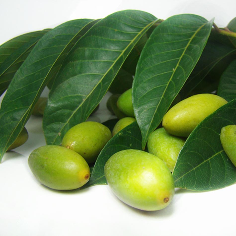 is olive a fruit fruit center