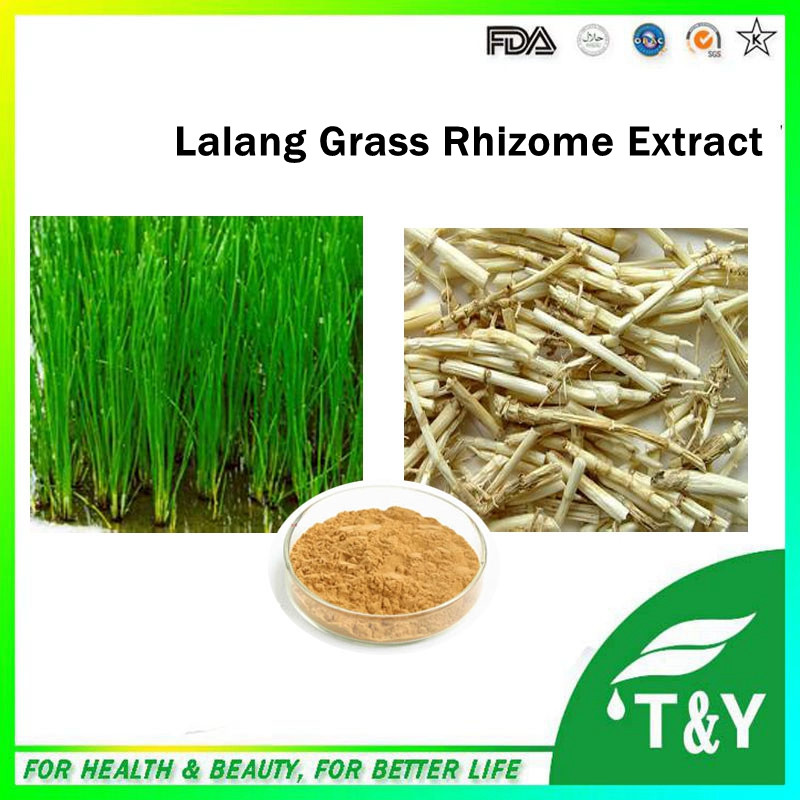GMP factory supply best popular high quality Lalang Grass Rhizome Extract 500g/lot(China (Mainland))