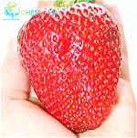 300/bag Giant Strawberry Seeds, Rare, Big as a Peach, Fragaria ananassa L. Maximus Strawberry fruit seeds for home garden(China (Mainland))