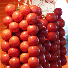 A Package 100 Pcs String Tomato Seed  Balcony Fruits Vegetables Bonsai Potted Home Tomato Plant Seeds Healthy Fruits Vegetables
