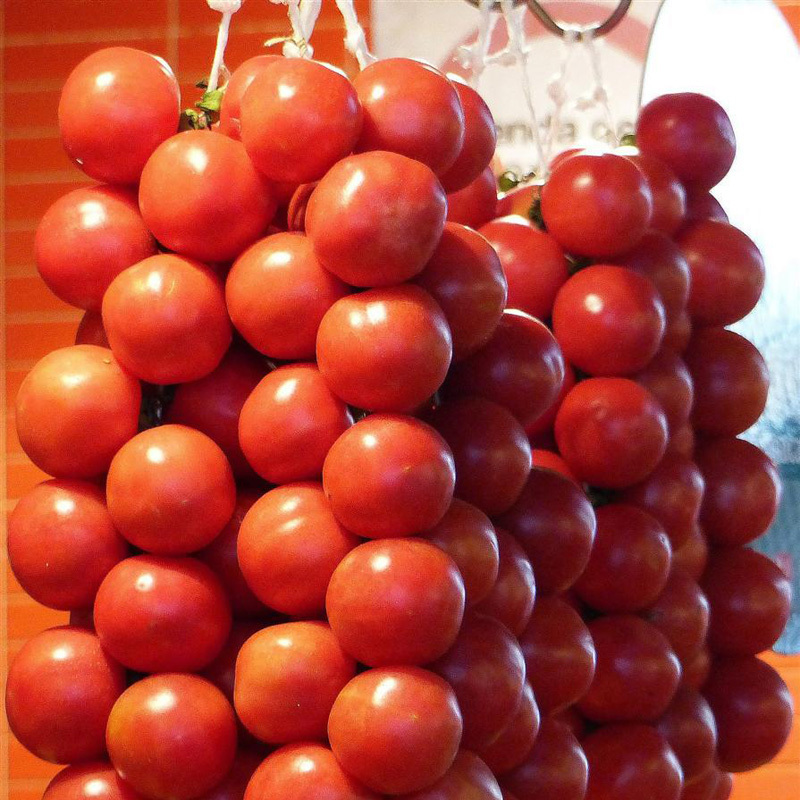 A Package 100 Pcs String Tomato Seed Balcony Bonsai Potted Tomato Plant Seeds Healthy Fruits Vegetables(China (Mainland))