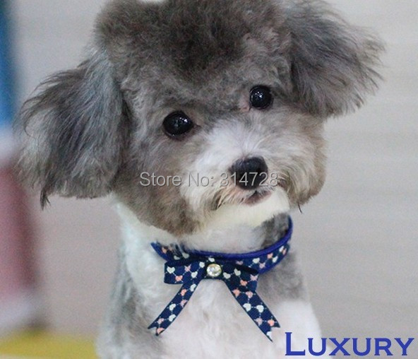 Free shipping designer blue heart bow tie adjustable dog collar pet leash outdoor walking products