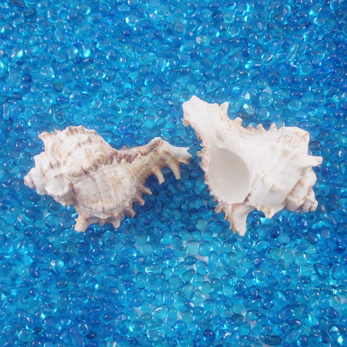 Aquarium fish tank dedicated natural landscape Senju shellfish shells shoot props photography props camera props(China (Mainland))