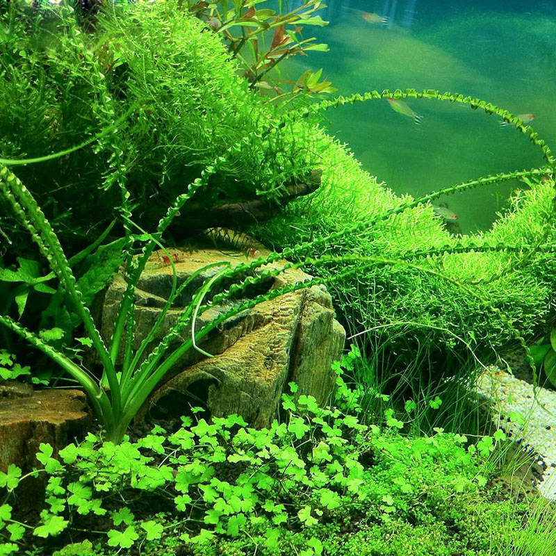 plantation plantes aquatiques promotion achetez des plantation plantes aquatiques promotionnels. Black Bedroom Furniture Sets. Home Design Ideas