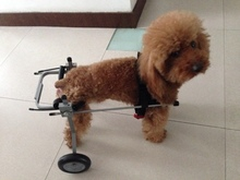 Free shipping with disabilities animal rehabilitation car instead of walking the dog dog walking car wheelchairSize XSBeijing,(China (Mainland))