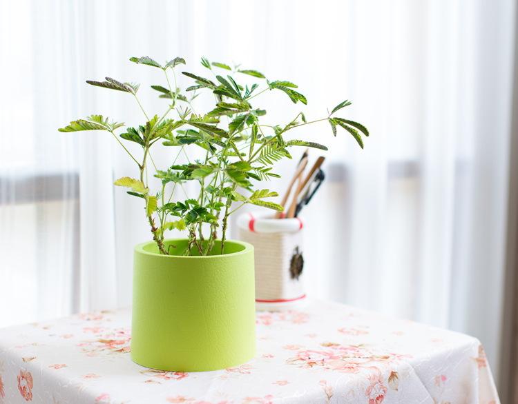 aliexpress   buy shelf decor flower pots planters home