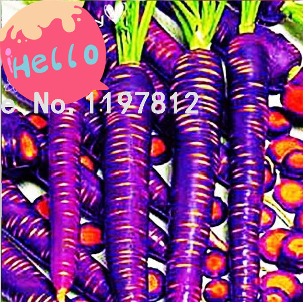 500 pcs / bag Purple Dragon Carrot seeds - Absolutely unique! Vegetable seeds carrot fruit seeds lose weight Free Shipping(China (Mainland))