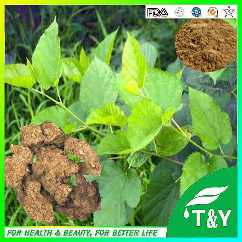 High Quality Pure Natural Swordlike Atractylodes Rhizome Extract Powder<br><br>Aliexpress