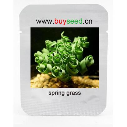 Sin mankind plants, broad leaf spring grass seeds, succulents new plants, 50pcs/bag(China (Mainland))