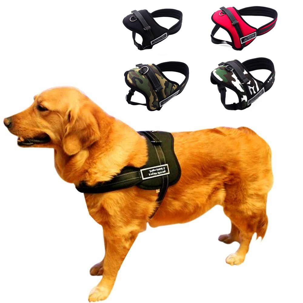 Leads For Boxer Dogs Reviews