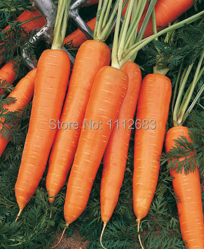 Carrot seed 350, excellent quality, garden seeds, suitable for home garden(China (Mainland))