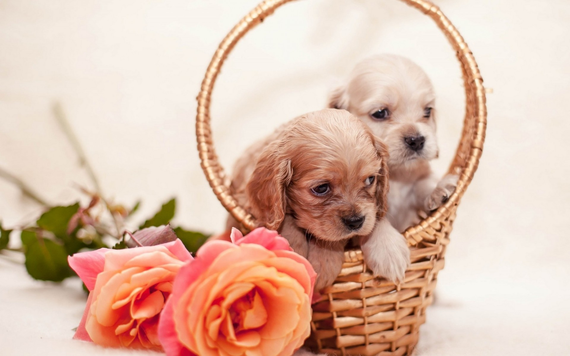 roses dogs puppies basket flowers 12x18 20X30 24X36 32x48 inch Poster Print 1(China (Mainland))