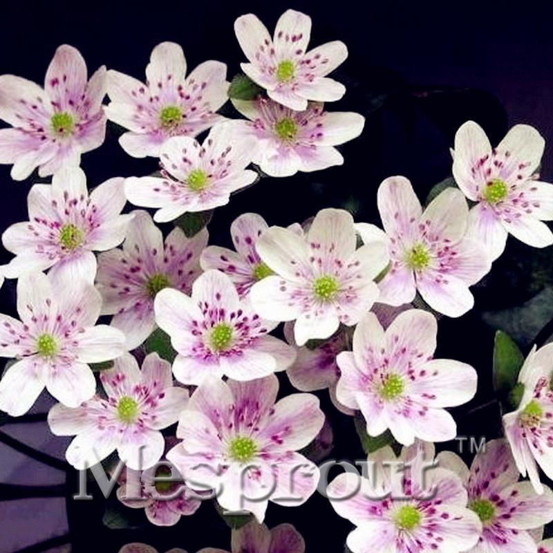 Pianta di orchidea promozione fai spesa di articoli in for Semi orchidea
