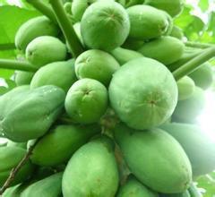 1kg 30:1 Papaya Extract<br><br>Aliexpress
