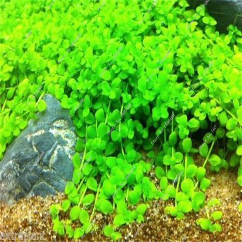 Online get cheap aquarium live plants for Cheap pond plants