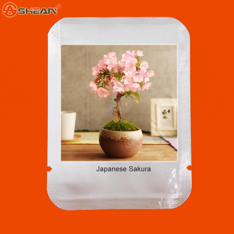 Japanese Sakura Flower Seeds 10pcs/lot Cherry Blossoms Bonsai Tree Seeds Sakura Seeds(China (Mainland))