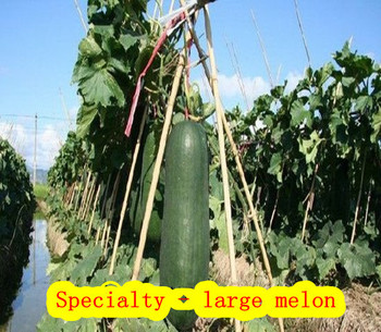 Farmhouse - Daejeon - melon (seeds) vegetable watermelon seeds 10 pcs / pack Home Garden - Free Delivery