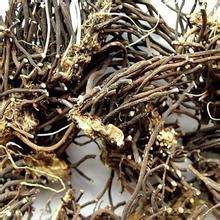 1000g natural plant extract powder radix clematidis extract