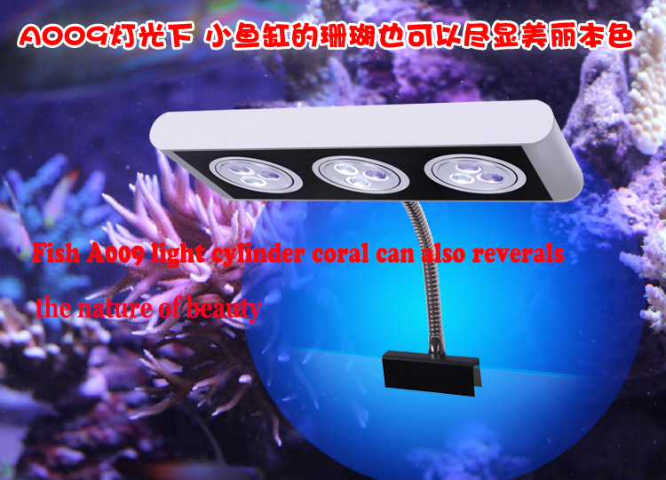 Saltwater fish cheap when it comes to keeping corals and for Discount aquarium fish and reef