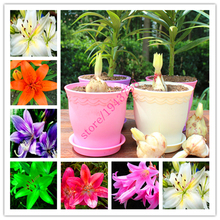 Buy 2 pcs True lily bulbs,lily flower, (not lily seeds),flower lilium bulbs,Faint scent,bonsai flower bulbs potted garden plants for $1.98 in AliExpress store