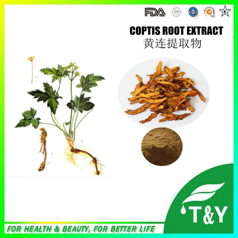 Reliable Manufacturer of Coptis Root Extract/ Berberine 500g/lot<br><br>Aliexpress