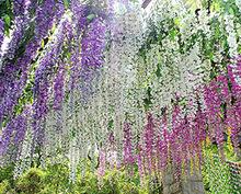 12pcs/lot Artificial 105CM home decor Wisteria silk flower holiday decoration weddings & events simulation flower (China (Mainland))