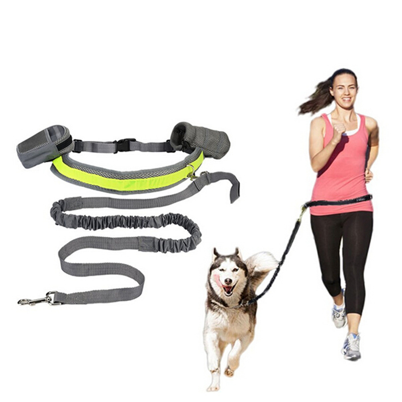 Hands Free Leash For Service Dogs