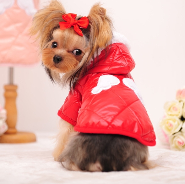 new 2015 little angel jacket dog clothes clothing dogs - GU International Trade store