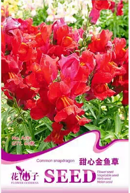 Sweetheart snapdragon flowers, hot potted seeds easy to grow new 60 A181(China (Mainland))