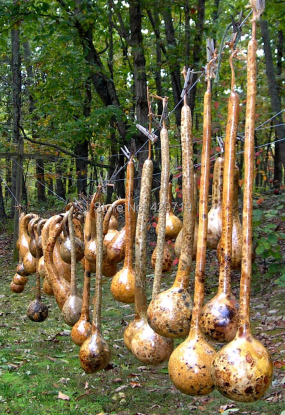 """10/bag Dipper Gourd Seeds,12"""" long necks and bulbs with a diameter of 5-7"""" use as a container,bottles, or musical instruments.(China (Mainland))"""