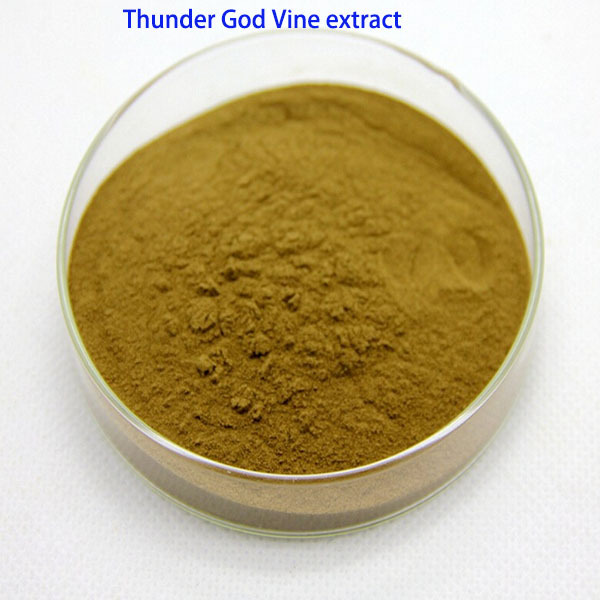 1kg bulk packing dispelling wind and eliminating dampness Thunder God Vine Leaf Extract lei gongteng extract(China (Mainland))