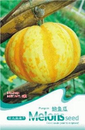 Free Shipping 1 Pack 8 Seeds Yellow Pumpkin Seeds(China (Mainland))