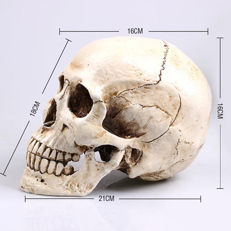 Popular skull home decor buy cheap skull home decor lots for Skull home decor
