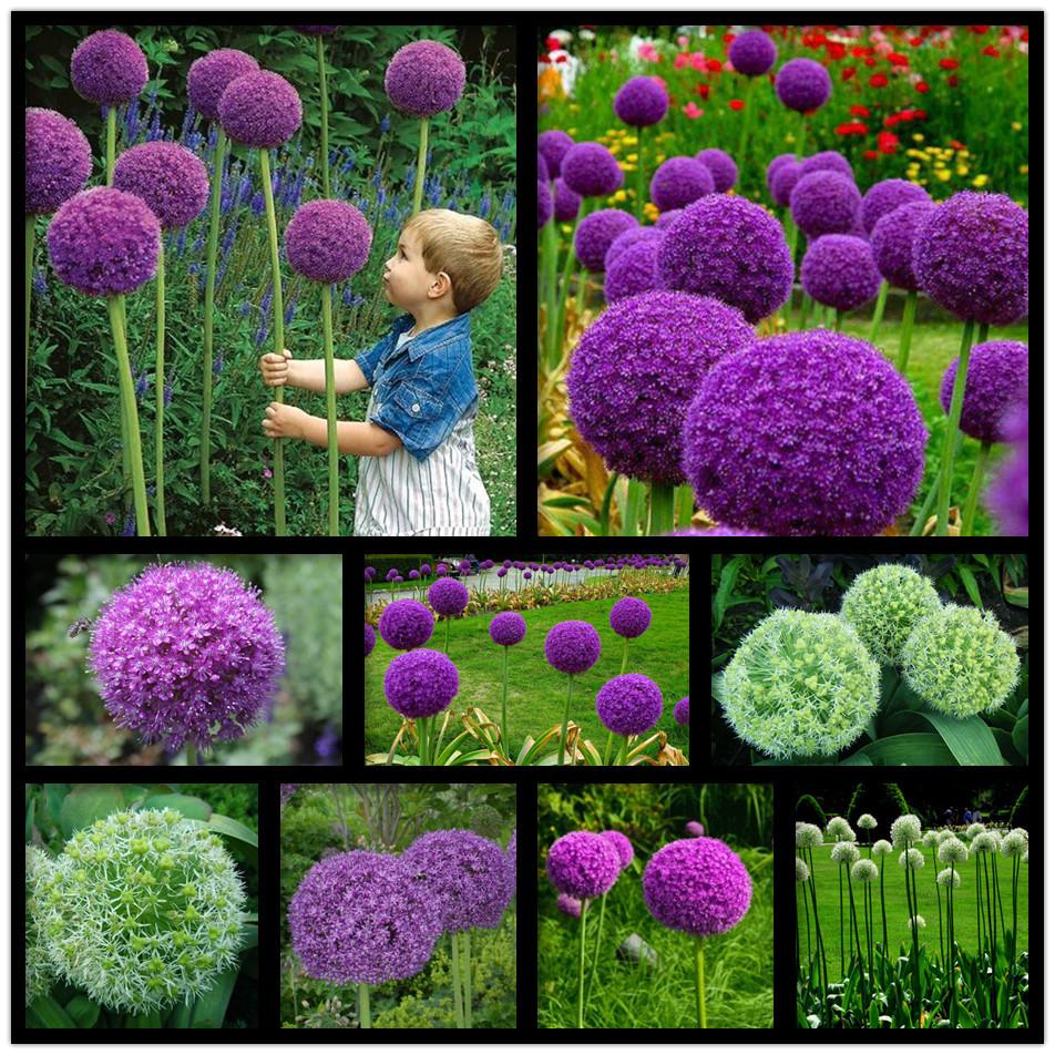 plantas de jardim lista : plantas de jardim lista:Greek Valerian Flower