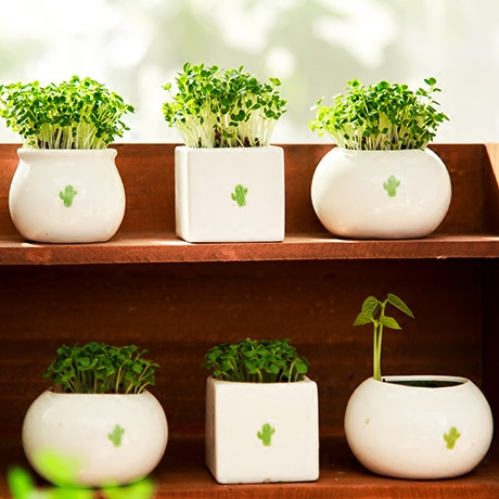 New Courtyard Bonsai Seeds with Ceramic Vase Easy Plant Herbs Garden Grass Seed Kawaii Bonsai Seeds Home Decor White Flowerpot(China (Mainland))
