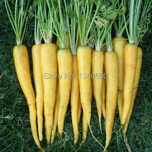 High Quality.50 Seeds/Pack.Annual Fruit and Vegetable Seeds Koral Carrot.DIY Home Garden&Bonsai Plant Seeds.(China (Mainland))