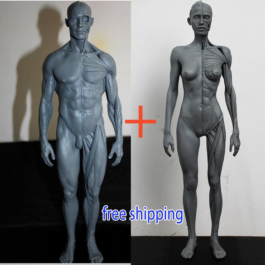 30cm 1:6 human body anatomy  model cg 3Dmax  model teaching model medical model male+female