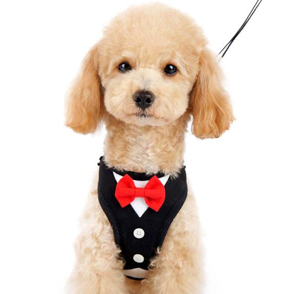 Здесь можно купить  2016 new dogs cats cool fashion evening dress harness supplies doggy harnesses products pets accessories dogs cats suit 10pcs  Дом и Сад